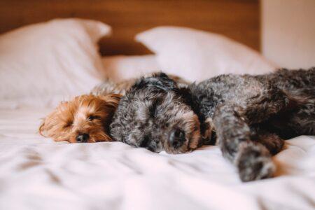 5-nasvetov-za-miren-spanec